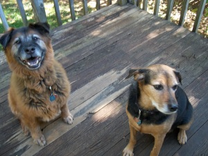 Dudley and Zoe both have sharp, pointed faces of dogs who typically live longer than those with flat faces