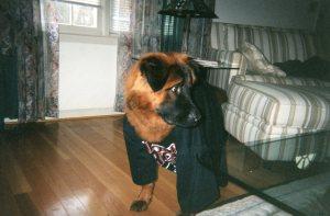 Hurricane dog in his Carolina Hurricanes tee shirt
