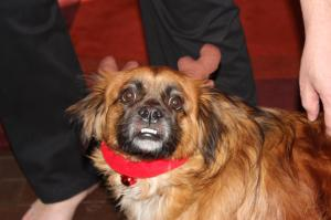 Christmas Lillie, a rescued mix breed dog my friend Kel and her family adopted