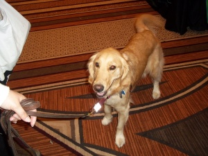 Another pretty face at BlogPaws!
