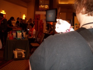Kitties were in attendance at BlogPaws!