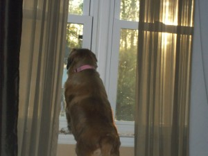 Lillie scoping out the neighborhood
