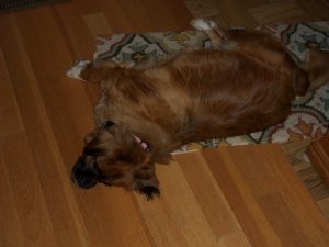 I preferred the rug to my bed for short naps.