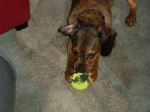 Sweet Pea skins her tennis ball