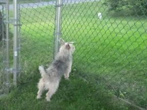 Mia on alert! Photo: Mike Reid