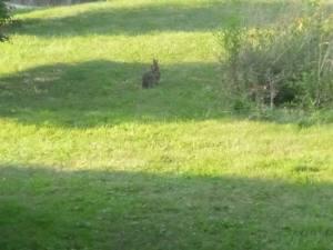Is it a rabbit or baby kangaroo? Photo: Mike Reid