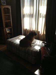 Lillie on watch!