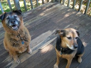 Dudley and Zoe 2010