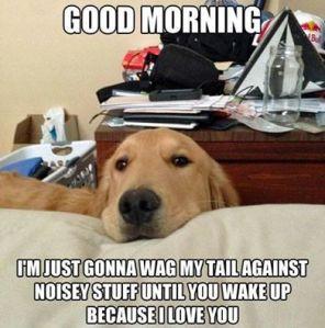 Morning Dog