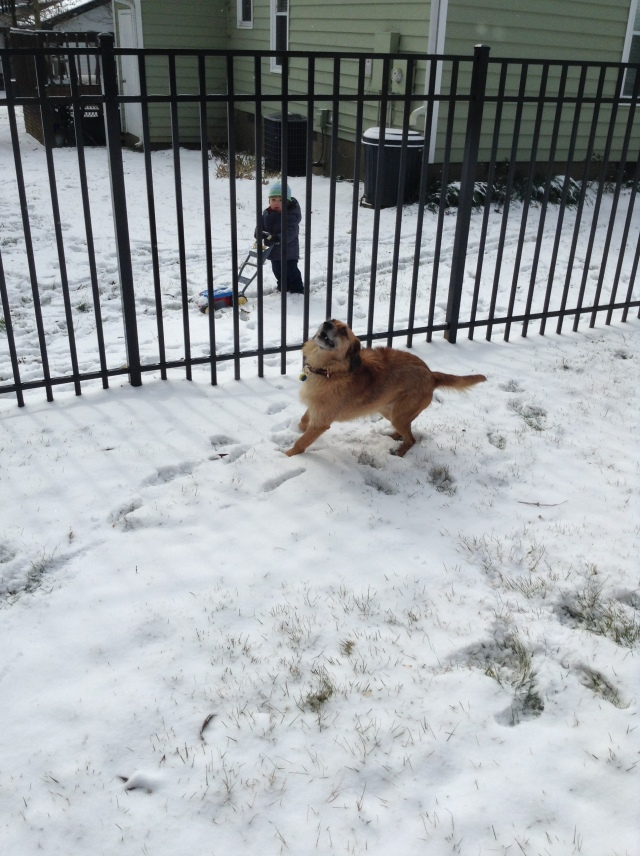 Louie celebrating the snow as Vance mows . . .