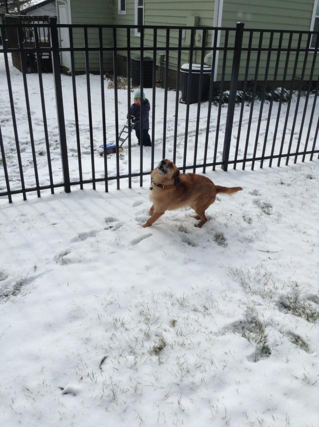 Louie celebrating the snow as Vance mows . . .