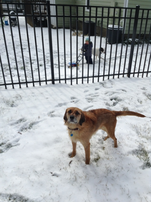 Louie digging the snow, in every sense of the word!