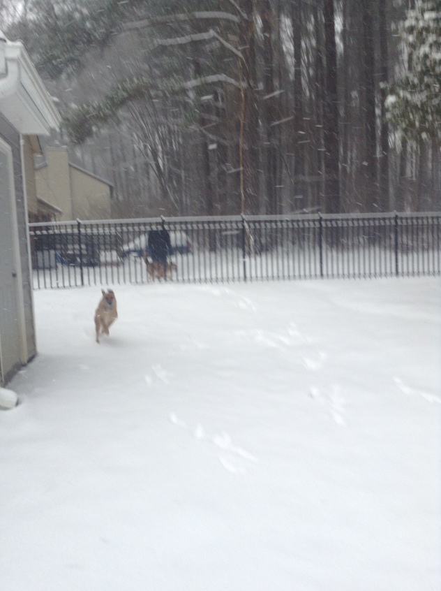 Action shot of Louie running