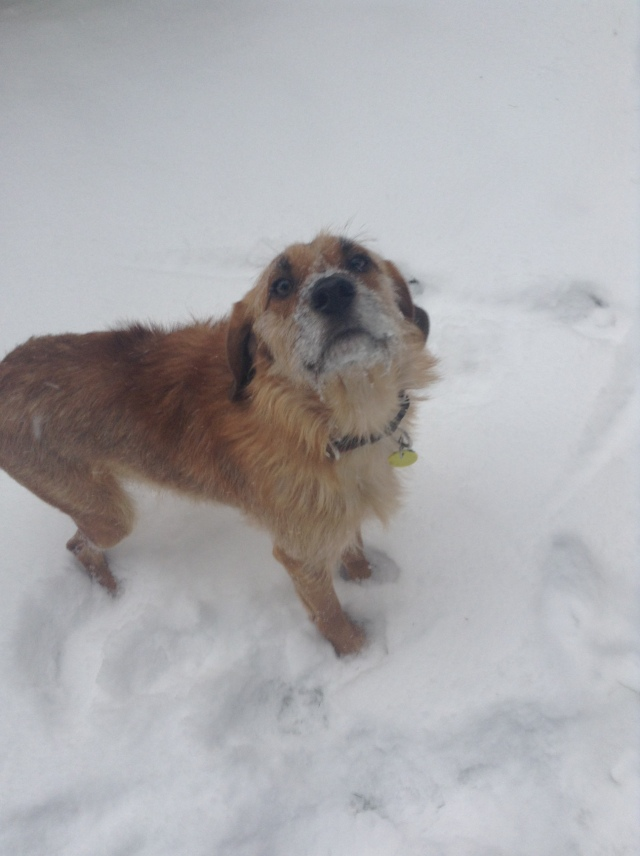 Louie digging the snow!