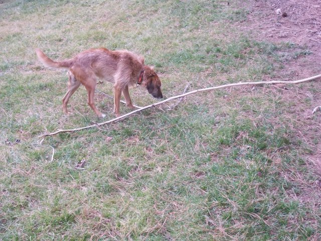 This gives you an idea of how long the stick was.