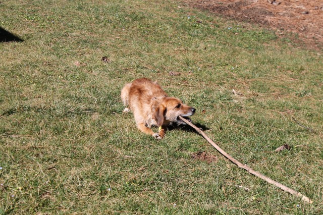 I'll chew on a stick while you watch hoops