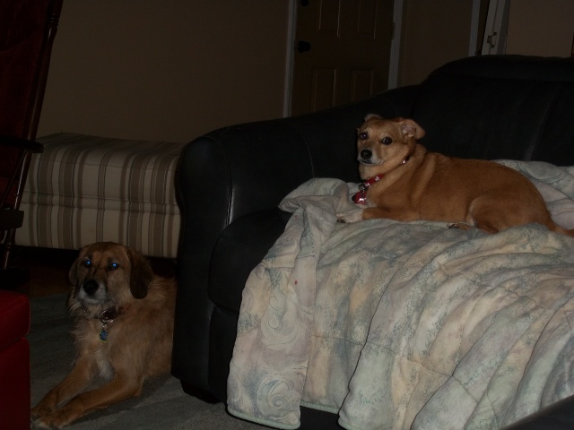 Louie and Penny in really bad light!